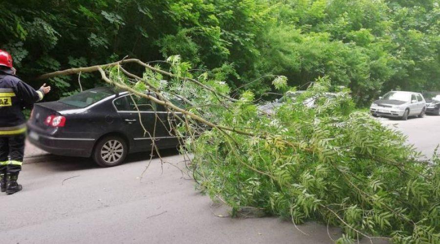 Powalone drzewo przygniotło samochód na ul. Ebersa