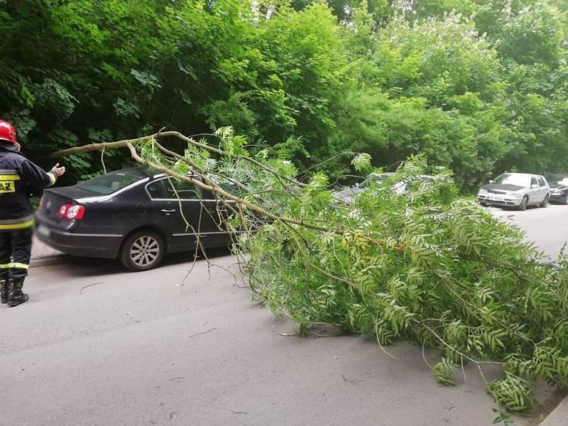 Powalone drzewo przygniotło samochód - fot, KMPSP NS